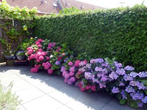 De nieuwe tuin is aangelegd