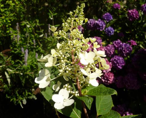 Een beplantingsplan voor de nieuwe tuin