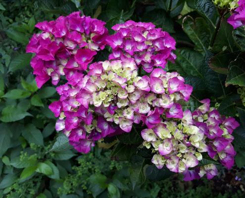 Het kiezen van de juiste planten in het beplantingsplan