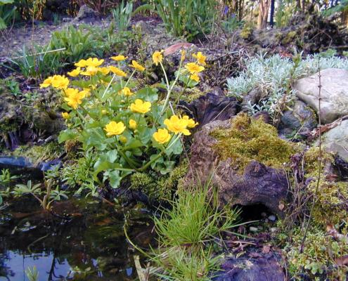 tuin vijver oeverbeplanting