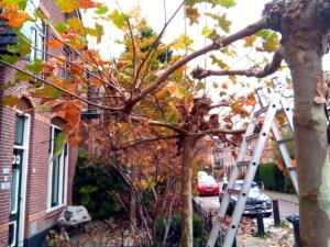 tuinonderhoud snoeien heesters struiken bomen